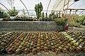 Greenhouses in qom عکس های گلخانه دنیای خار در روستای مبارک آباد قم 21.jpg
