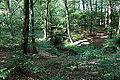 Greven - NSG Bockholter Berge 64 Gellenbach ies.jpg
