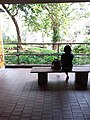 HKU 香港大學 PFL campus 薄扶林校園 Lotus pond long bench visitor sitting April 2019 SSG.jpg