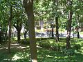 HK CWB The Leighton Hill Public Garden Trees.JPG