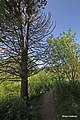 Haavistolla - panoramio.jpg
