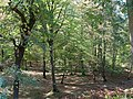 Hambach forest 37.jpg