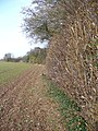 Hampshire Hedgerow - geograph.org.uk - 620433.jpg