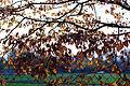 Hanau Herbst.jpg