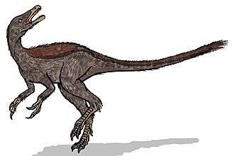 Shishugou Formation - Haplocheirus
