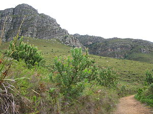 English: Helderberg Nature Reserve in Cape Tow...