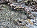 Hershey Creek. (23568c1118bf4c74bfdc25ae1d71727f).JPG