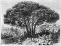 Hetzel Magasin1903 d192 Monographies végétales 3.png