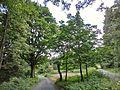 Hier stand bis 2013 das Forsthaus Königskron - panoramio.jpg