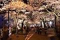 Hitachi Sakura Festival, Ibaraki 30.jpg