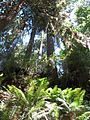 Hoh Rainforest - Olympic National Park - Washington State (9779995032).jpg