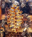 Honey bee box 3.jpg