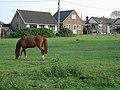 Horse Paddock - geograph.org.uk - 417480.jpg