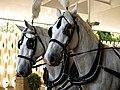Horse drawn hearse horses City of London Cemetery 2 lighter.jpg