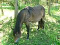 Horse eating.jpg
