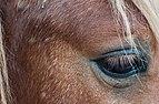 Horse from Barquisimeto zoo.jpg