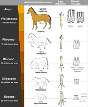 Vývoj koně