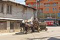 Horses in Mitrovica.jpg