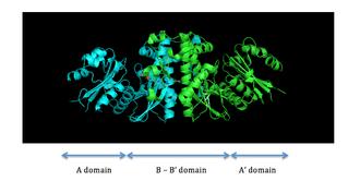 Pantothenate kinase - Fig. 1 Dimer structure of PanK-II