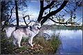 Husky (11293289843).jpg