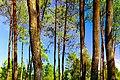 Hutan kaki gunung ungaran.jpg