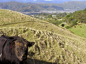 Looking into the Hutt Valley in New Zealand.