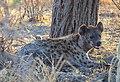 Hyena (8063485657).jpg
