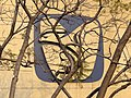 IMSS (Social Security) Logo - Siglo XXI Medical Center - Mexico City - Mexico (6480187989).jpg