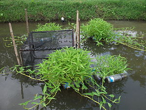 Integrated multi-trophic aquaculture - IMTA systems in freshwater pond
