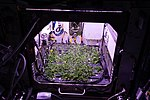 ISS-56 Arabidopsis plants inside the Advanced Plant Habitat (2).jpg
