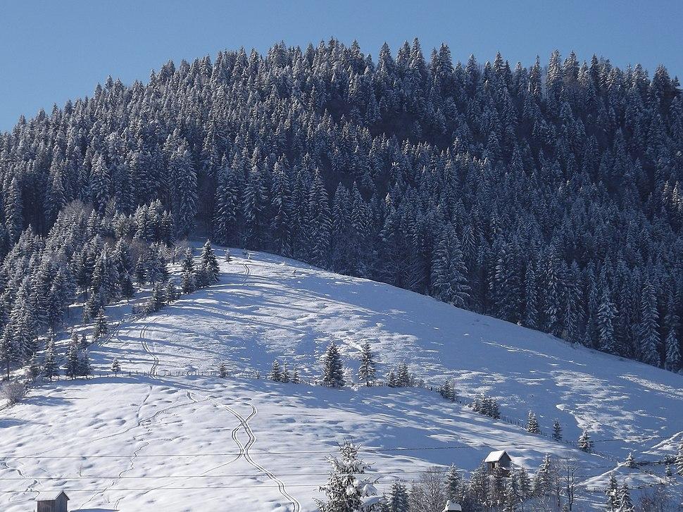 Iarna - panoramio (7)