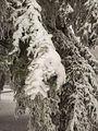 Ice damage, December 2014-2.jpg