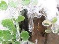 Ice glaze detail.jpg
