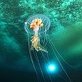 Ice planet and antarctic jellyfish (crop).jpg