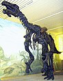 Iguanodon Skelett 2.jpg