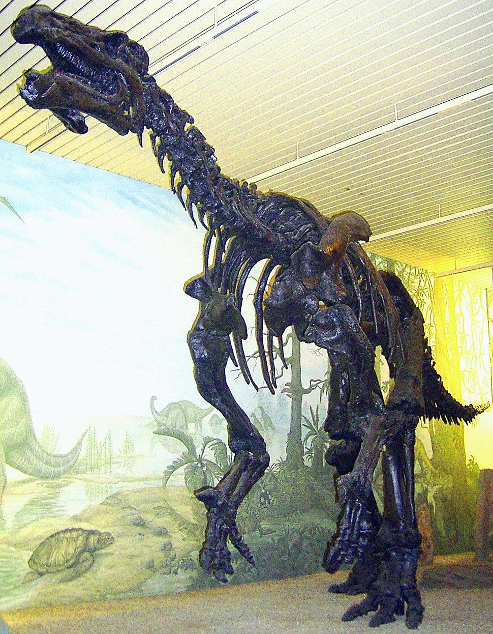 Iguanodon Skelett 2