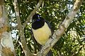 Iguazu National Park-109972.jpg