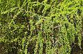 Im Hartensteiner Wald..2H1A2293WI.jpg