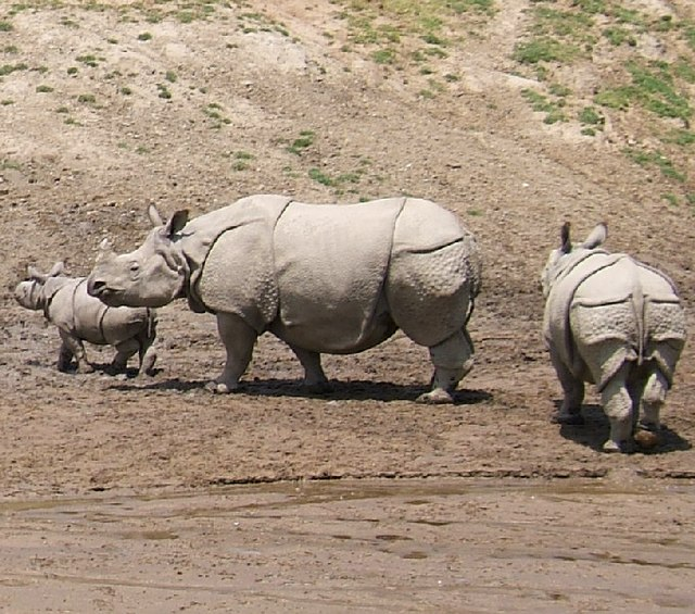 பொது அறிவு தகவல்கள் 640px-Indian_Rhinoceros
