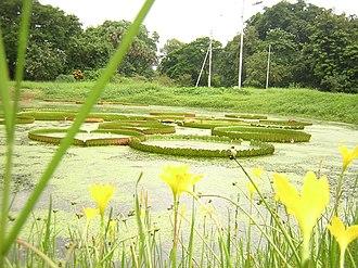 Acharya Jagadish Chandra Bose Indian Botanic Garden - Image: Indian botanical gardens