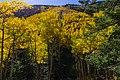 Inner Basin Trail No. 29 (30124485686).jpg
