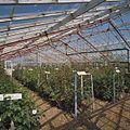 Interieur rozenkas - Aalsmeer - 20404556 - RCE.jpg