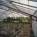 Interieur rozenkas - Aalsmeer - 20404557 - RCE.jpg