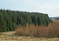 Into the Forest - geograph.org.uk - 378930.jpg