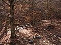 Invierno 2011 en Tejera negra - panoramio (5).jpg