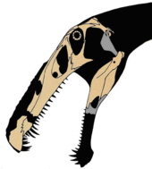 Skull bones from Irritator and Angaturama plotted onto a silhouette of the head, by paleontologist Jaime A. Headden