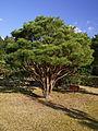 Ishibeshuku museum04s3200.jpg