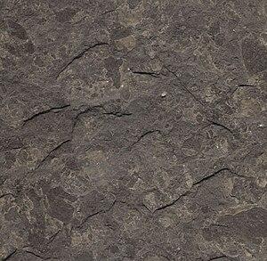 Oil shale geology - Lower Jurassic oil shale near Holzmaden, Germany.
