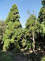 J. C. Raulston Arboretum - DSC06240.JPG