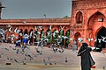 Jama Masjid Pigeons.jpg